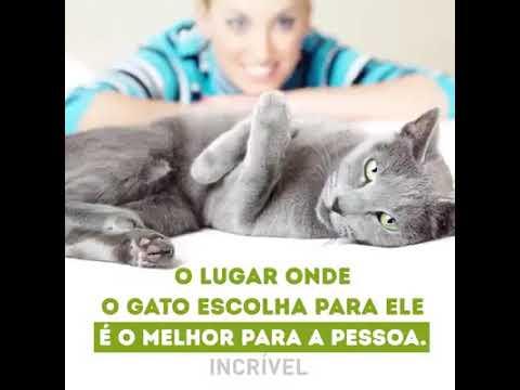 GATOS SÃO SAGRADOS