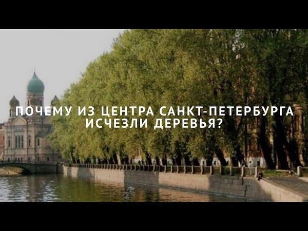 Почему из центра Санкт Петербурга исчезли деревья
