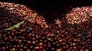 Kurukahveci mehmet efendi mahdumları   sons of sir mehmet the dry-coffe maker - since 1871 ·