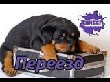 Подкаст - Переезд на новый канал twitch.tv/esl_luffi