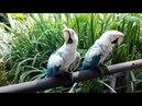 Zoológico temaiken mutação arara vermelho branco azul
