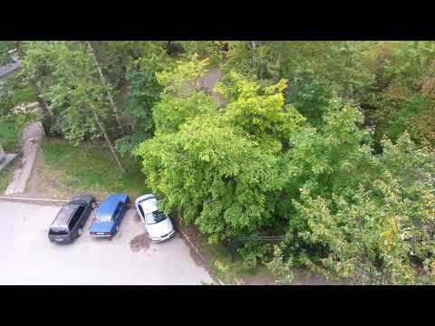 На деревьях желтой прибавляется листвы