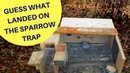 Guess What Landed on this Sparrow Trap