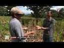 Salvador: l'infatigable lutte des paysans contre les pesticides