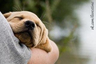 Собаки тоже верят в бога.  Их бог высок, и мрачен, и двуног.  Собаки ждут - вот встал он у порога.
