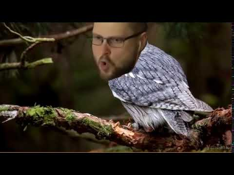 Куплинов сова