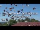 Питомник Николаевских Высоколетных голубей им А С Брагина Презентация