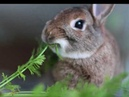 Tiernisimos conejitos bebes