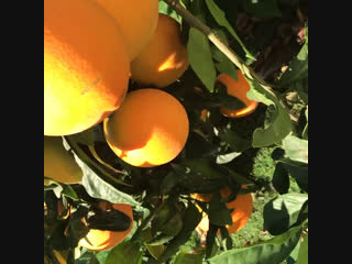 Солнечное утро и апельсины 🍊
