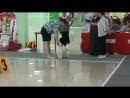Региональная выставка собак всех пород ранга САС-КЧФ 13.08.17. г. Белгород.