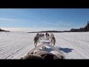 Dog Sledding Mushing in Fairbanks Alaska
