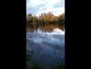 утки в шуваловском парке