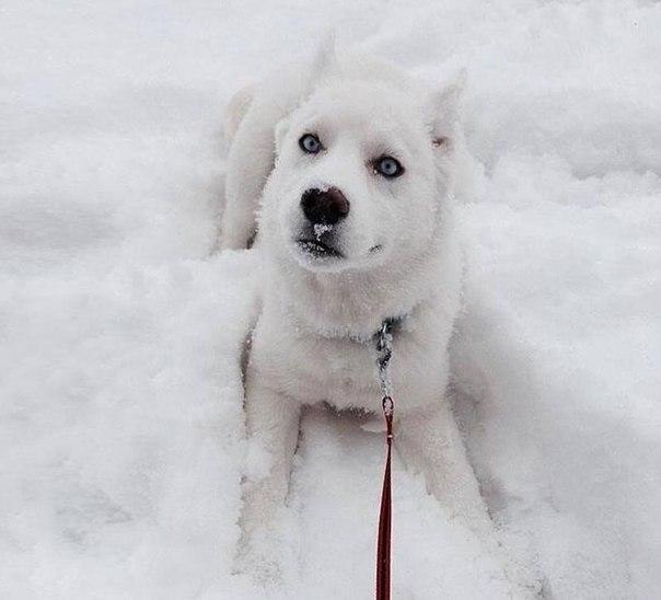 Пес, который впервые увидел снег