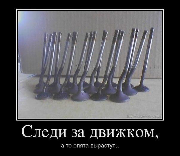 cs409517.vk.me/v409517137/312e/f5jTu7S5mHQ.jpg