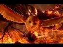 Легенды ночных стражей (2010) Трейлер