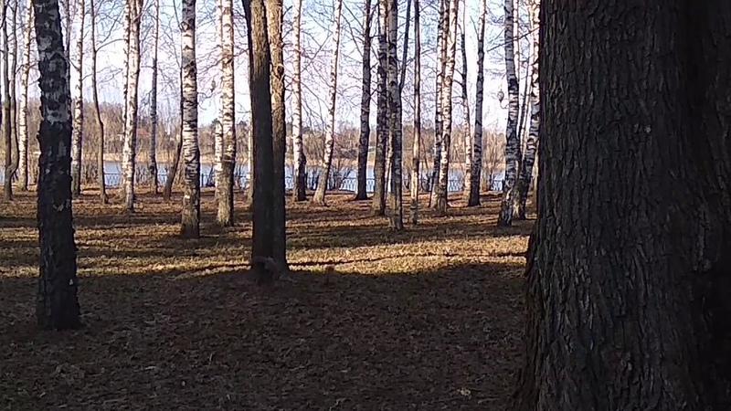 Белки в Рыбинске набережный парк