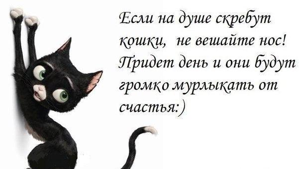 http://cs315324.vk.me/v315324355/5a3c/D3Em6LxZdAA.jpg