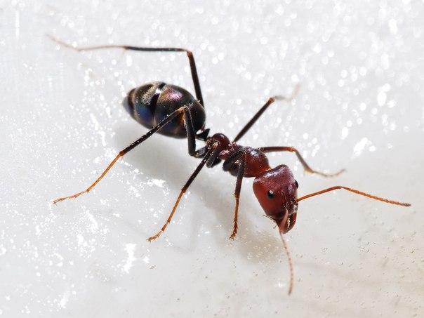 Сказка про муравья.