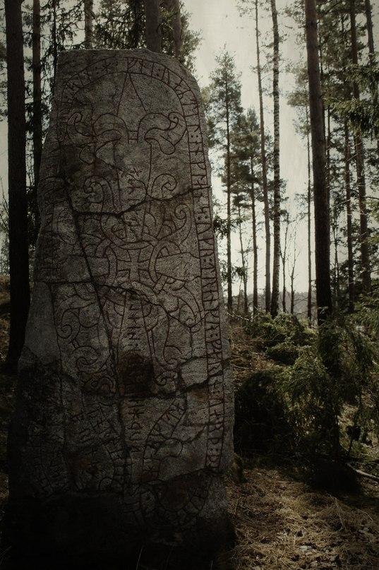 Теневой лес L33tMG6guFI