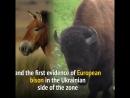 Die Tierwelt von Tschernobyl gedeiht 30 Jahre nach der nuklearen Katastrophe