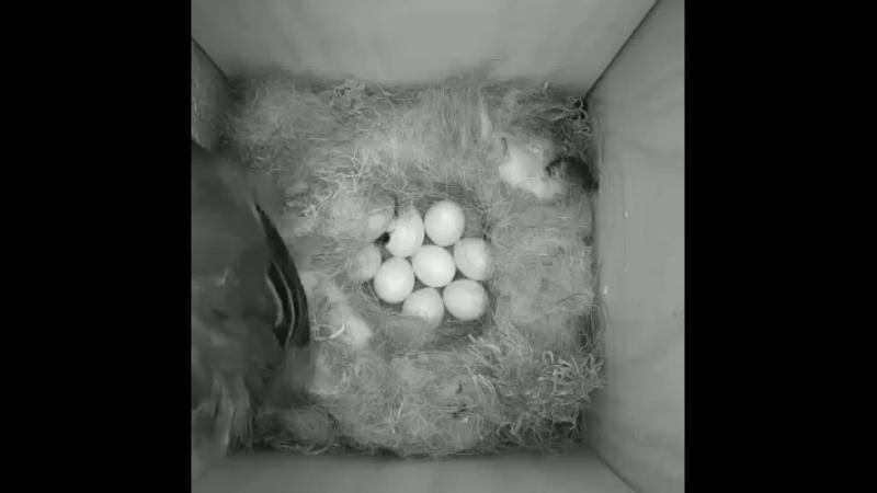 Скрытая камера в доме у птичек...