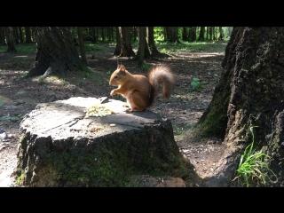 Белка в московском лесу