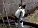 Стриптис кошки