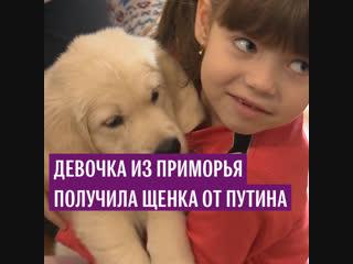 Девочка из Приморья получила щенка от Путина