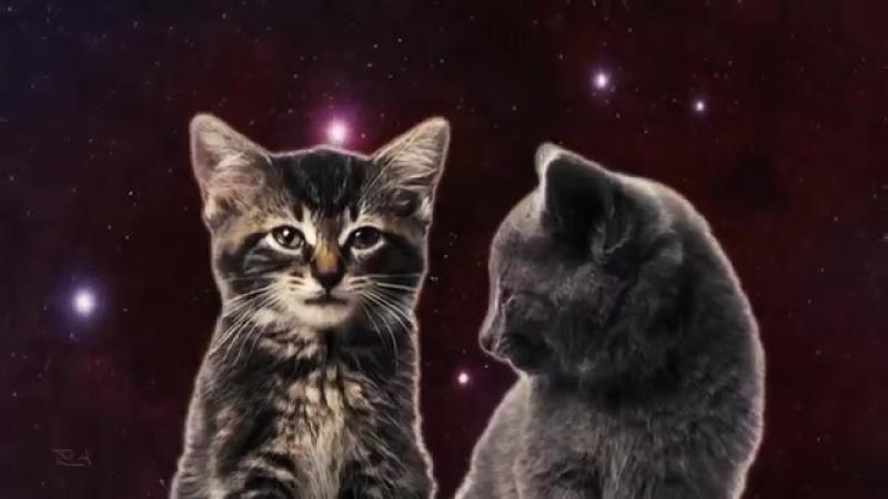 Котята прикольно поют