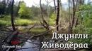 Джунгли Живодёра: кабаны, бобры, плотина, купание в родниковом ручье в глуши
