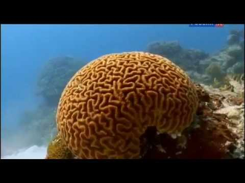 моря жизни/BBC