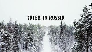 DJI Mavic Pro - Amazing taiga in Russia   Красота таёжного леса в России, Республика Коми