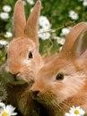 """Схема вышивки  """"Кролики в ромашках """": таблица цветов."""