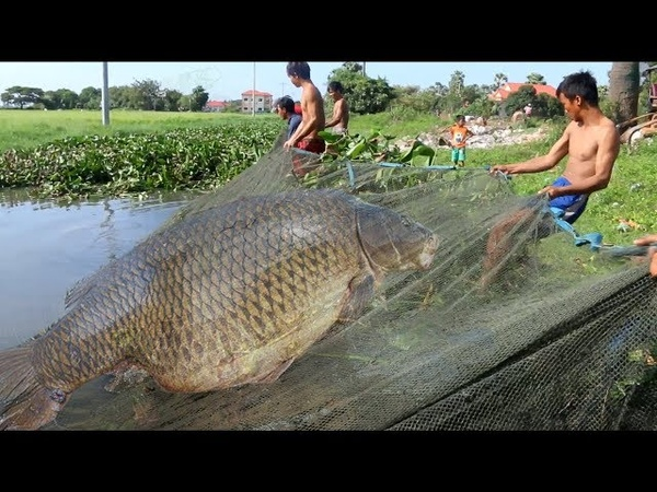 Net Fishing | People Catching a lot Fishing in Siem Reap Province