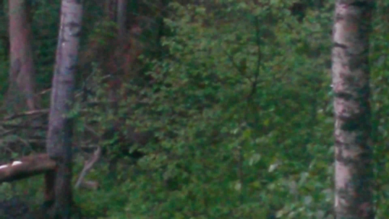 Лосишка в лесу