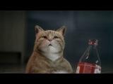 Реклама со смешным котом)))