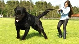 10 Dogs that are Stronger than You