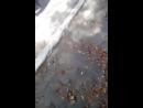 В Волновахе полиция сбила женщину
