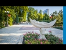 Донецк - город роз