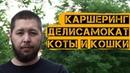 Выпуск 1 Каршеринг Делисамокат Покормили котиков