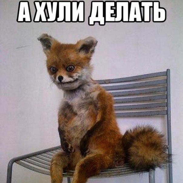 """Второе судно с американским углем прибыло в Украину, - порт """"Южный"""" - Цензор.НЕТ 6444"""