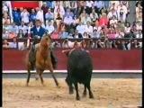 Мерлин – единственная лошадь в мире которая воспринимает корриду как игру с быком.