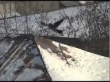 Ржачные ролики с животными 2! )))