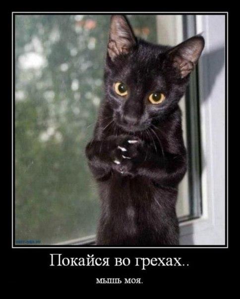 Да, о котиках!