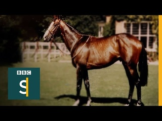 Shergar: The Mystery Of A £10m Horse - BBC Stories