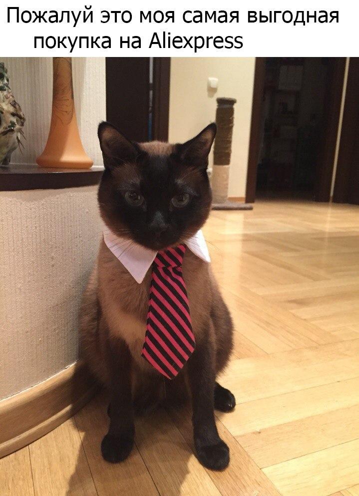 Галстук для кота