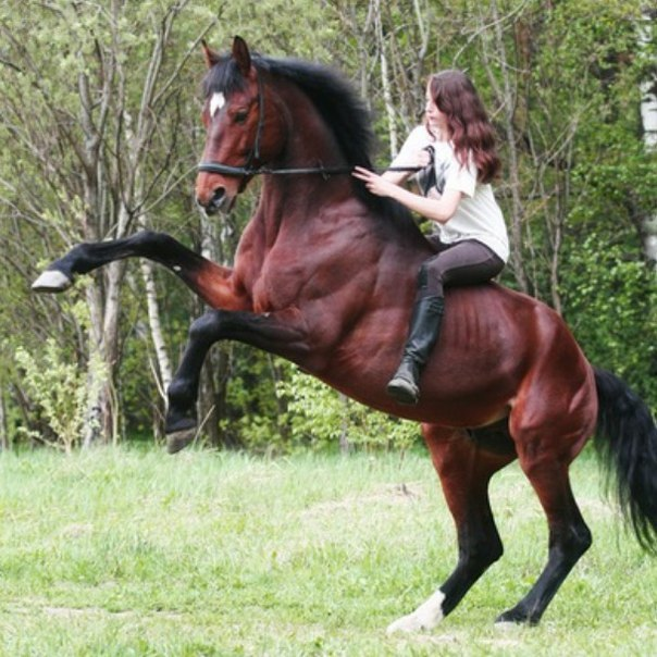 Как отучить лошадь козлить? - Horse ru