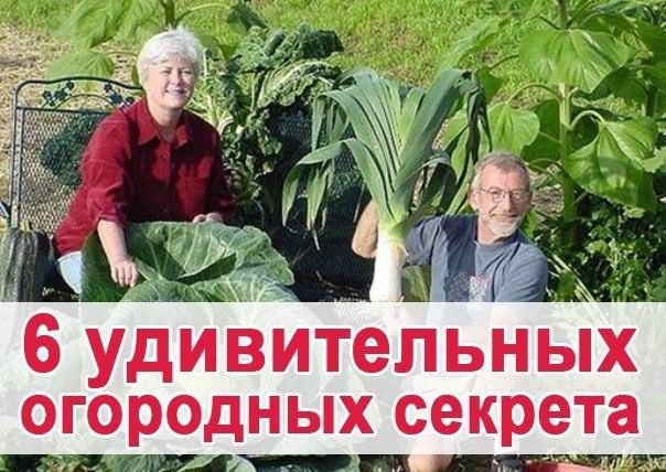 6 удивительных огородных секрета (1 фото) - картинка