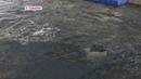 Животных из китовой тюрьмы в ближайшее время не тронут