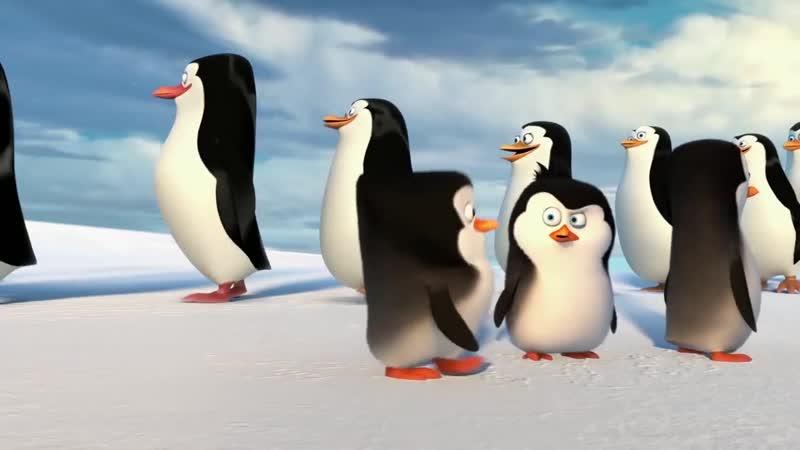 Мадагаскар. Пингвины